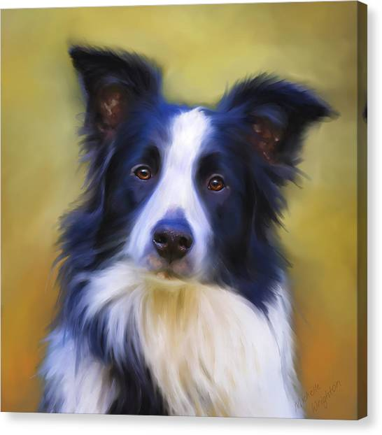 Beautiful Border Collie Portrait Canvas Print