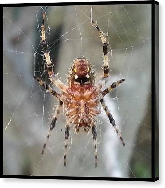 Spider Web Canvas Print - Taking An Afternoon Break From Web by Kevin Previtali