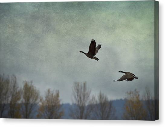 Canvas Print featuring the photograph Taking Flight by Belinda Greb