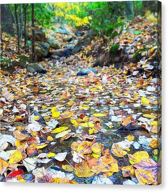 Appalachian Mountains Canvas Print - Fountain Of Youth by Simon Nauert