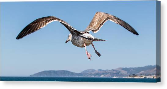 Taking To The Sky Canvas Print by Ian McMorran