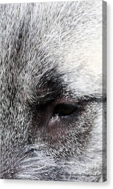 Tala's View Canvas Print by Ann Butler