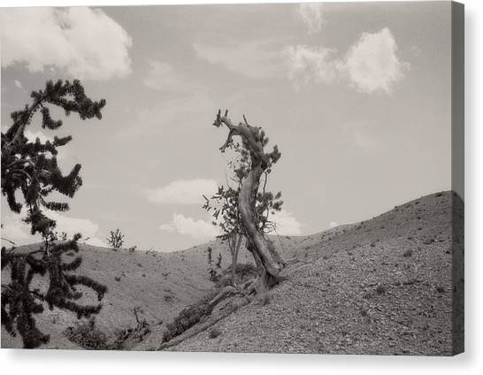 Talking Trees In Bryce Canyon Canvas Print
