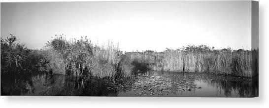Anhinga Canvas Print - Tall Grass At The Lakeside, Anhinga by Panoramic Images
