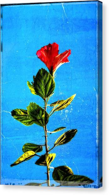 Hibiscus Canvas Print - Tall Hibiscus - Flower Art By Sharon Cummings by Sharon Cummings