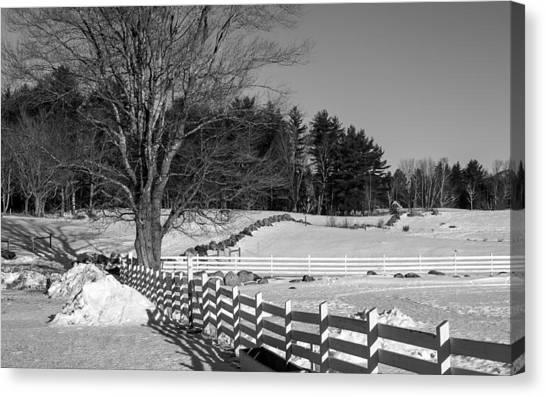 Tamworth Maple In Winter Canvas Print