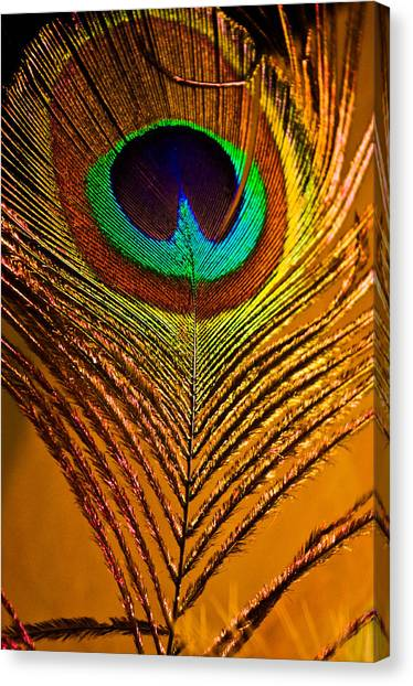 Tan Feather Canvas Print