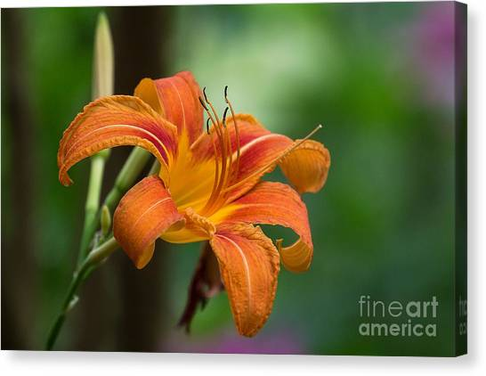 Tangerine For A Day Canvas Print