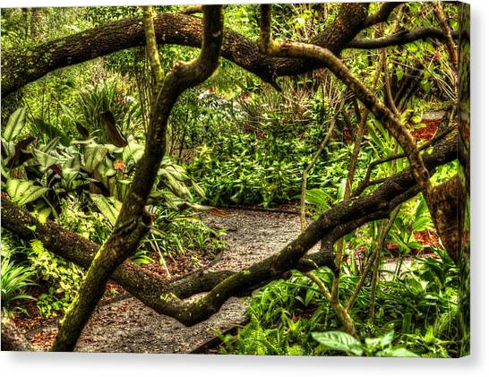 Tangled Path Canvas Print