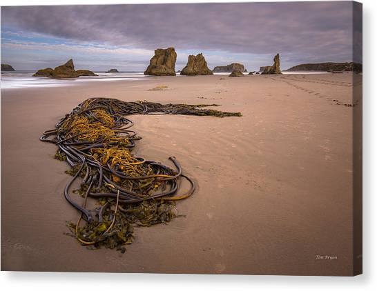 Tangled.... Bandon Oregon Canvas Print