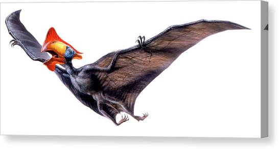 Pterodactyls Canvas Print - Tapejara Pterosaur by Deagostini/uig