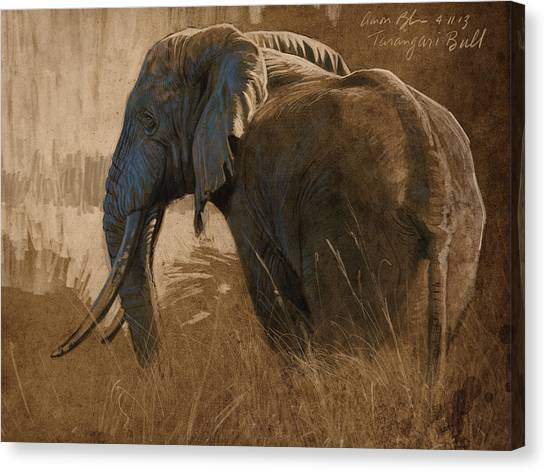 Digital Canvas Print - Tarangire Bull by Aaron Blaise