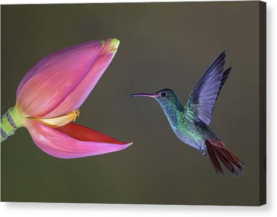 Wildlife Canvas Print - Target Practice by Greg Barsh