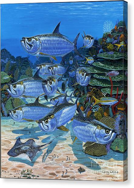 Tiger Sharks Canvas Print - Tarpon Alley In0019 by Carey Chen