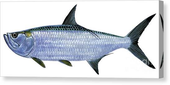 Swordfish Canvas Print - Tarpon by Carey Chen