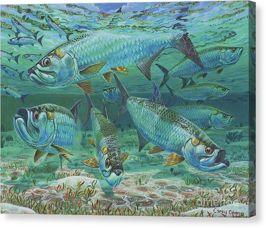 Tuna Canvas Print - Tarpon Rolling In0025 by Carey Chen
