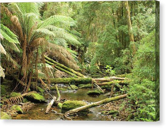 Tasmanian Rain Forest River All Profits Go To Hospice Of The Calumet Area Canvas Print