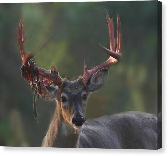 Tattered Stag Canvas Print