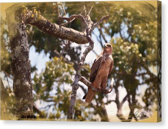 Canvas Print featuring the photograph Tawny Eagle by Perla Copernik