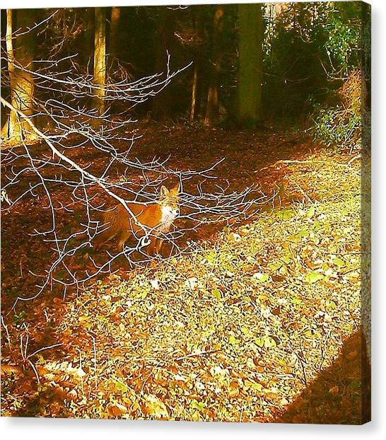 Foxes Canvas Print - #tbt A Few Weeks Back I'd Had A Good by Karl Giles
