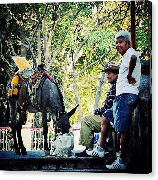 Donkeys Canvas Print - Te Veo by Natasha Marco