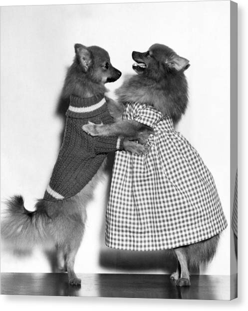 Pomeranians Canvas Print - Teaching A Young Dog New Trick by Underwood Archives