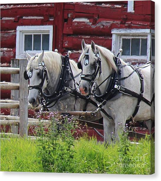 Canvas Print featuring the photograph Team Of Greys by Ann E Robson