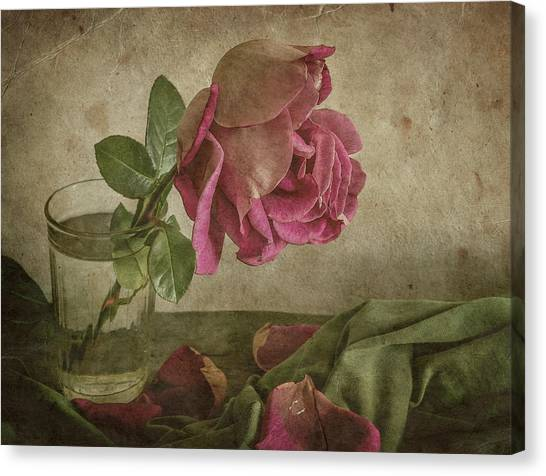 Tear Of Rose Canvas Print by Igor Tokarev