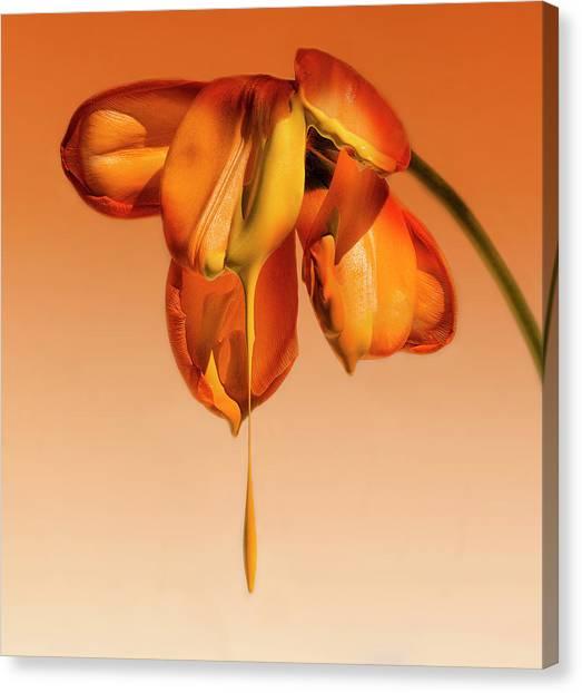Salvador Dali Canvas Print - Tears Of A Flower by Kent Mathiesen