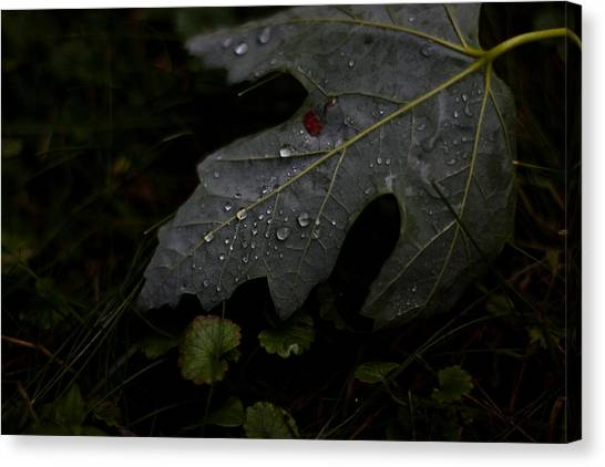 Tears Of A Leaf Canvas Print by Michael Murphy