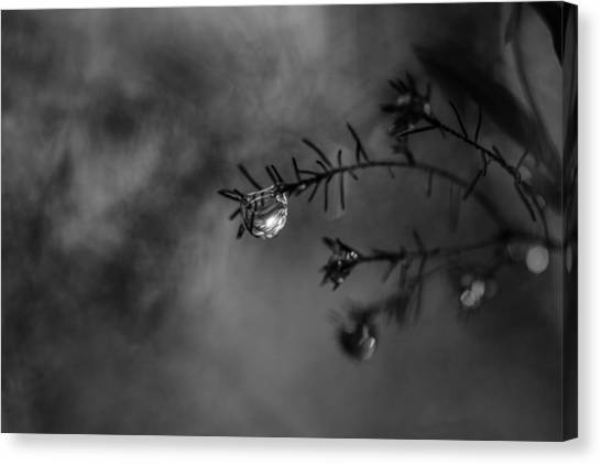 Gota Canvas Print - Tears Of The Forest by Daniel Vazquez