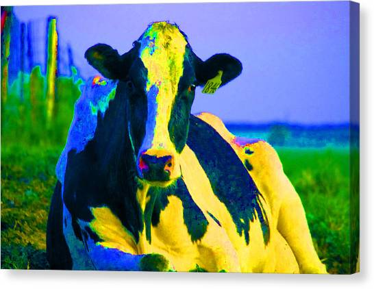 Techno Cow Photograph By Jordon Deutmeyer