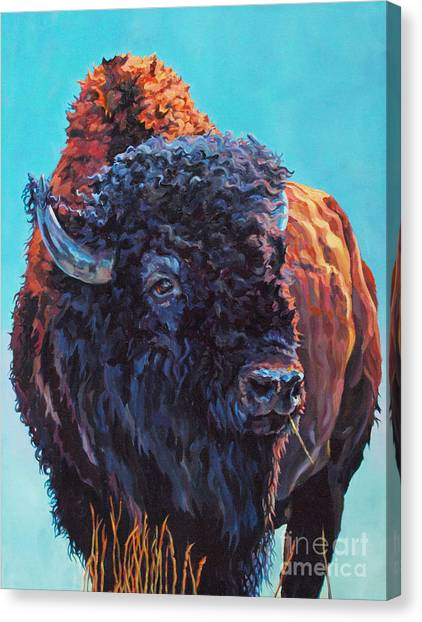 Bison Canvas Print - TED by Patricia A Griffin