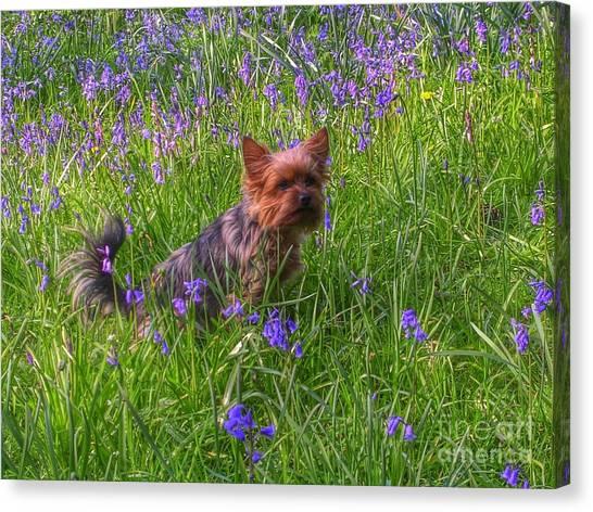 Teddy Amongst The Bluebells Canvas Print
