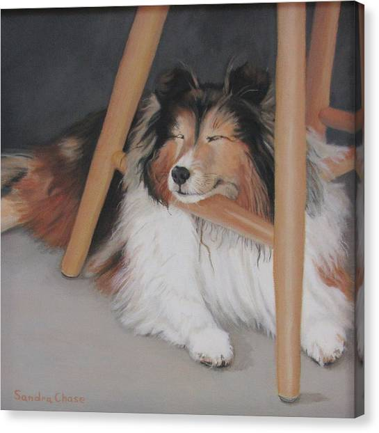 Canvas Print - Teddy In My Studio by Sandra Chase