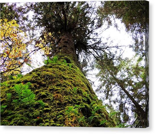Tell Me Tree Canvas Print