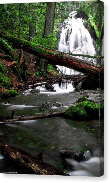 Temperate Old Growth Canvas Print