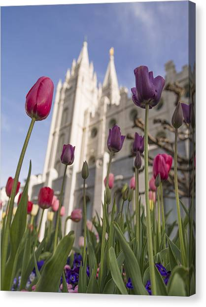 Judaism Canvas Print - Temple Tulips by Chad Dutson