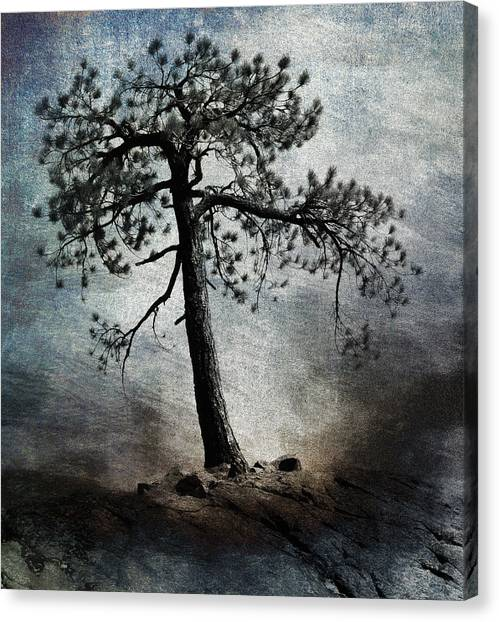 Pine Trees Canvas Print - Tenacity by Carol Leigh
