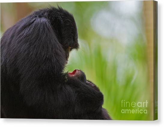 Tender Moments Canvas Print by Ashley Vincent