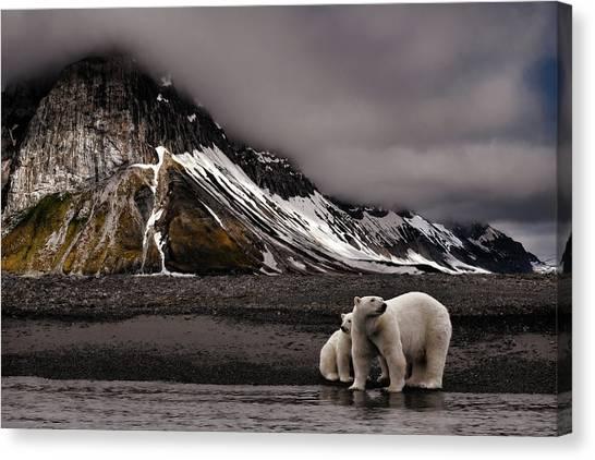 Polar Bears Canvas Print - Tenderness by Mathilde Collot