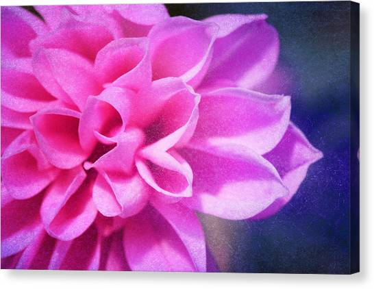 Tendre Canvas Print by Angela Bruno