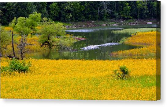 Tennessee Black-eyed Susan Field Canvas Print