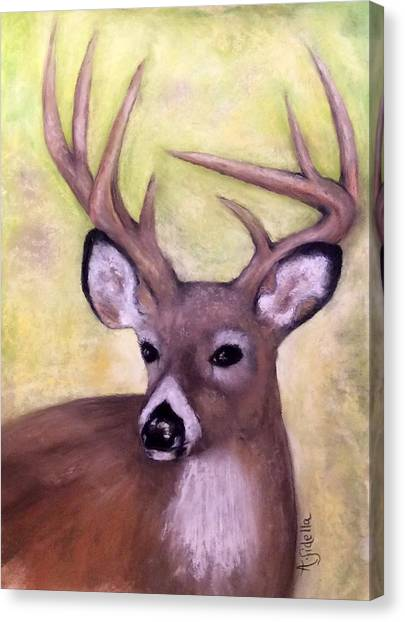 Tennessee Wild Life - Buck Canvas Print
