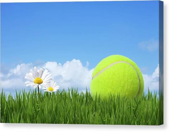 Tennis Ball Canvas Print by Andrew Dernie