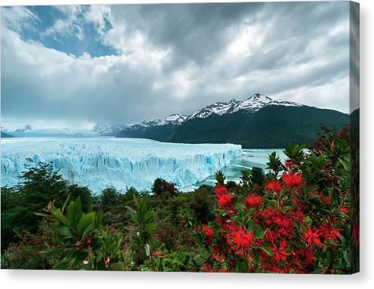 Perito Moreno Glacier Canvas Print - Terminal Face Of The Perito Moreno by James White