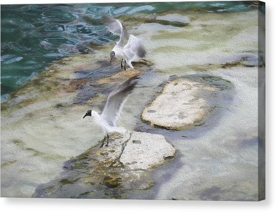 Tern On The Shore Canvas Print