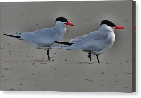 Terns In The Wind Canvas Print by Helen Carson