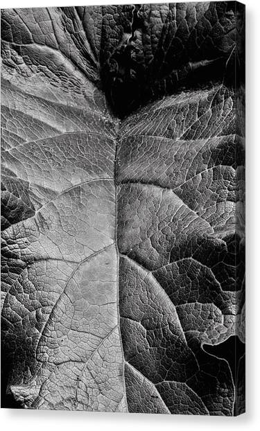 Terrestrial  Canvas Print by JC Findley