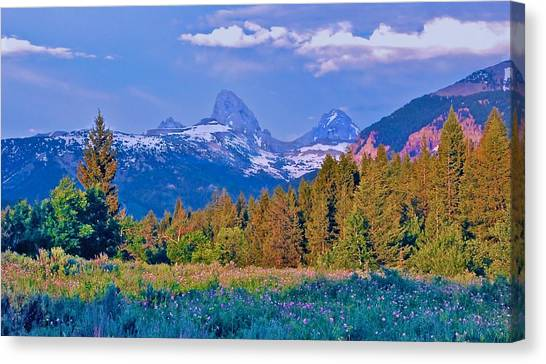 Teton Backside Wildflowers Canvas Print by Larry Bodinson
